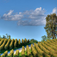 Franciacorta Vino e Natura 3 giorni Borgolago Suites Iseo